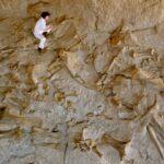 کشف بزرگترین سایت فسیلی در غرب خراسان رضوی
